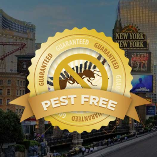 Pest Control in Las Vegas NV from Pest Control Inc